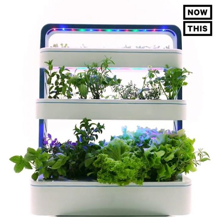 This Countertop Garden Is Like A Keurig For Herbs Via